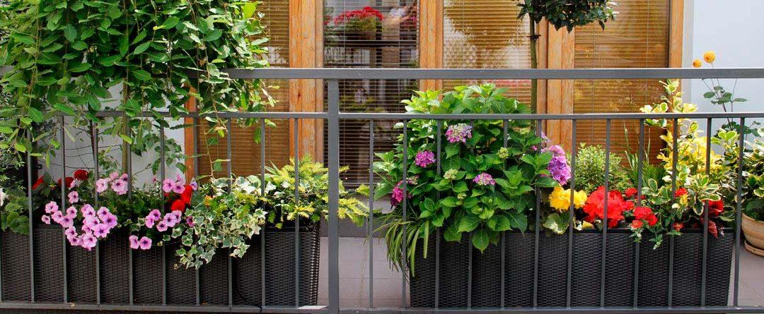 Mejores plantas para jardines o terrazas en Madrid