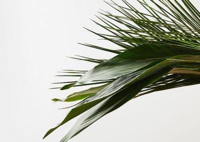 Mano sosteniendo hojas de palmera